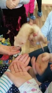 встреча с животными в детском центре наши дети в Марьино (105)