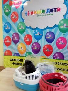 встреча с животными в детском центре наши дети в Марьино (41)